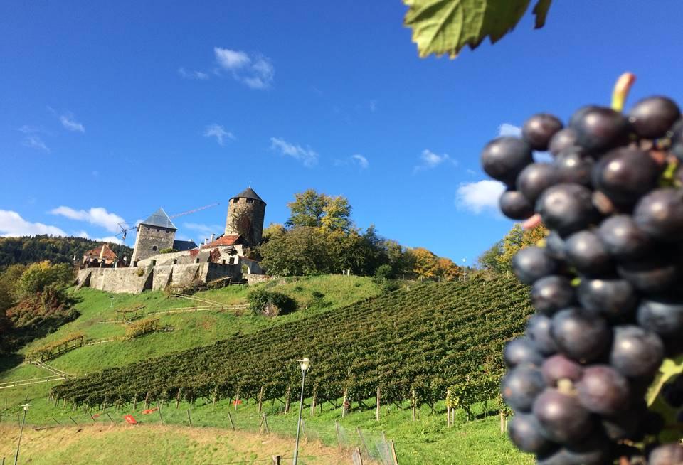 Weinhang am Fuße der Burg Deutschlandsberg