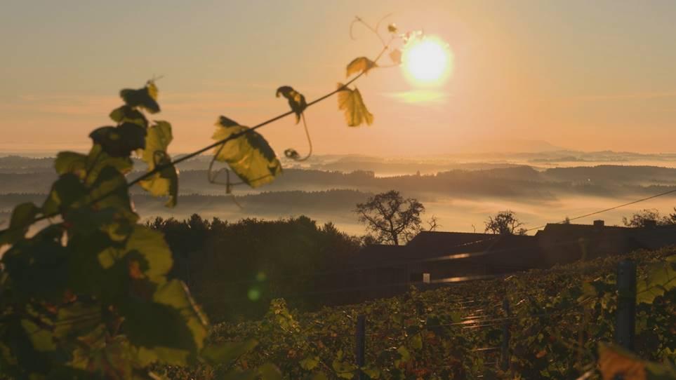 Herbstlandschaft im Schilcherland – Blick von St-Stefan ob Stainz nach Stainz